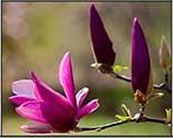 aspire flower essence spray