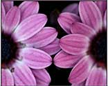 codependency flower essence spray