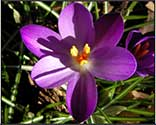 forgiveness flower essence spray