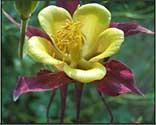 higher altitudes flower essence spray