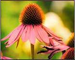 self esteem flower essence spray